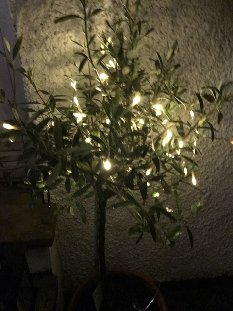 Morrisons bay tree and Amazon UK outdoor battery operated fairy lights